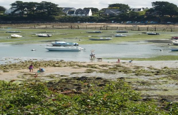 Elodie Maison - Pêcheurs à pied dans le Golfe du Morbihan